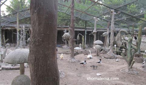 باغ پرندگان 034