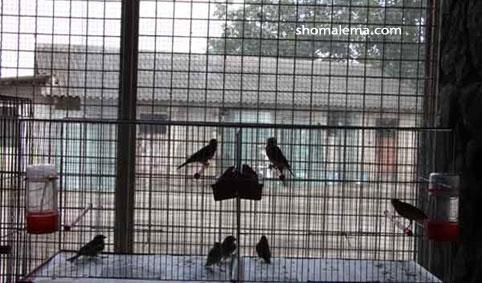 باغ پرندگان 035