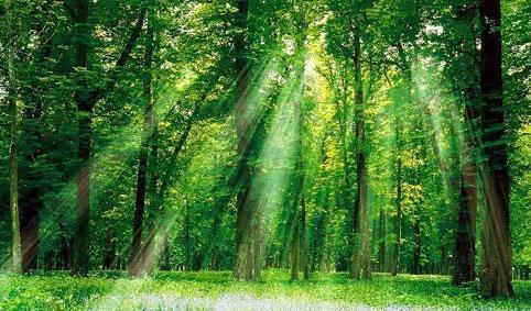 جنگل 011