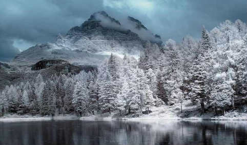 درخت برف ۹۱