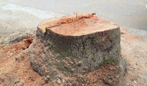 درخت ۰۵۶