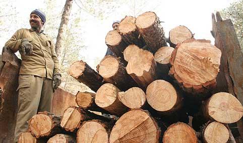 قطع درختان011