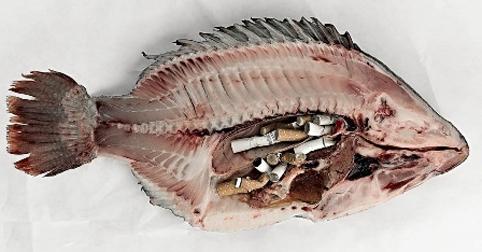 ماهی ۰۶۳