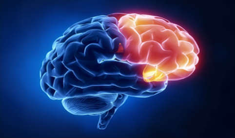 مغز ۹۱